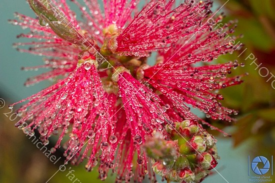 Water Droplets on Bottle Brush